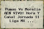 <b>Pumas Vs Morelia</b> ¡EN VIVO! Hora Y Canal Jornada 11 Liga MX <b>...</b>