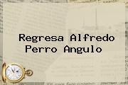 <i>Regresa Alfredo Perro Angulo</i>