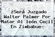 ¿Será Juzgado Walter Palmer Por Matar Al <b>león Cecil</b> En Zimbabue?