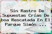Sin Rastro De Supuestas Crías De <b>boa</b> Rescatada En El Parque Simón ...