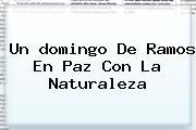 Un <b>domingo De Ramos</b> En Paz Con La Naturaleza