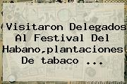 Visitaron Delegados Al Festival Del Habano,plantaciones De <b>tabaco</b> ...
