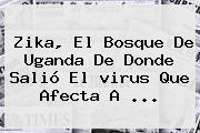 <b>Zika</b>, El Bosque De Uganda De Donde Salió El <b>virus</b> Que Afecta A <b>...</b>