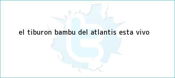 trinos de El <b>tiburón Bambú</b> del Atlantis ¡está vivo!